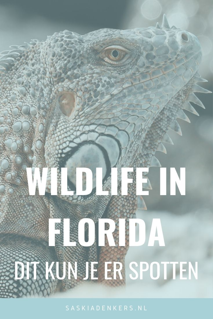 Wildlife Florida - Dit heb ik gespot.Tijdens onze reis door Florida spotte ik veel wildlife. En wildlife is iets wat ik als hobbyfotograaf heel graag voor de lens van mijn fotocamera heb.