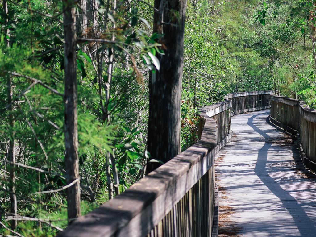 Houten wandelpad in Kirby Storter Park In de Everglades